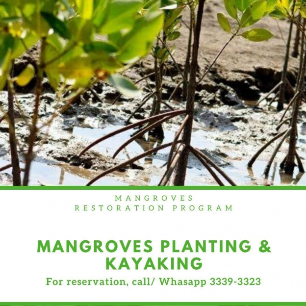 Mangroves Planting and Kayaking by 365 Adventures
