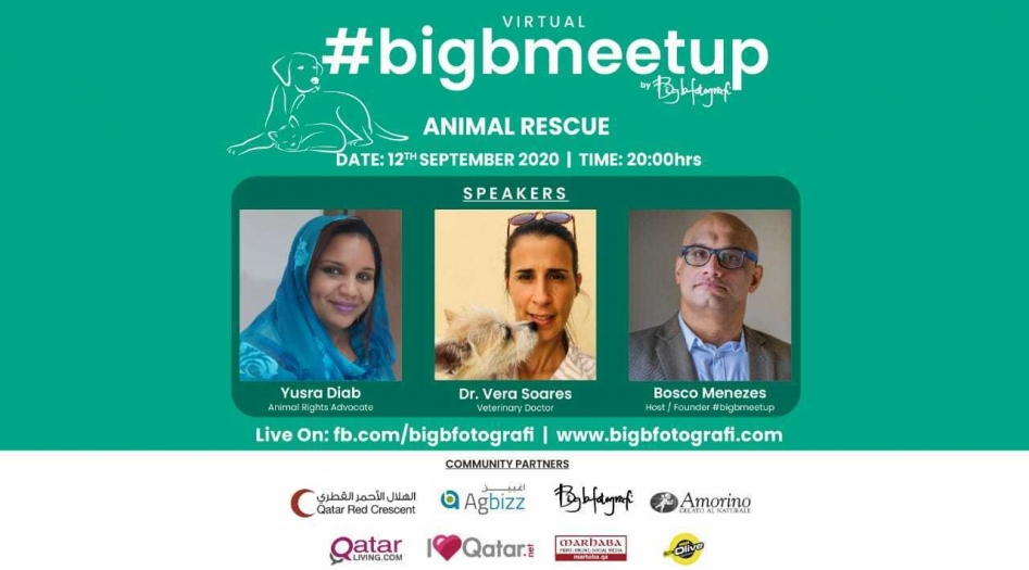 Virtual #BigBMeetUp on Animal Rescue